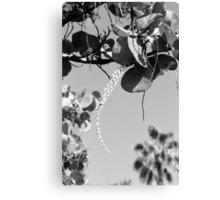 Sea Grape Blossoms Canvas Print