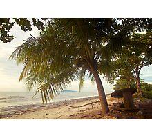 Landscape   Beach   Coconut Tree Photographic Print