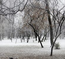Park During Heavy Snowfall In Winter In Bucharest, Romania by PhotoStock-Isra