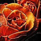 Orange Roses by Robin Black