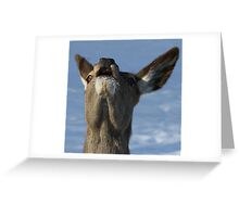 Yeodle Greeting Card