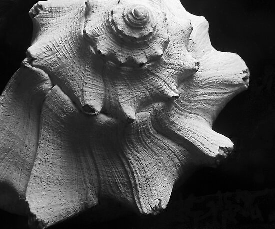 Shell by marybedy