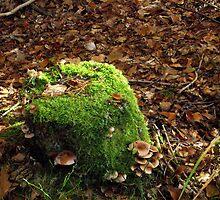 Fungi and Moss on Tree Stump by SophiaDeLuna