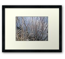 Scrub Brush Framed Print