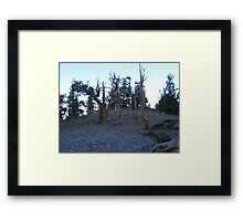 The Knights Framed Print