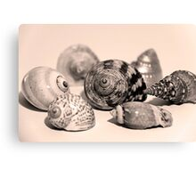 Small Collection of Shells Canvas Print