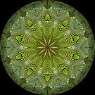 Lizard Kaleidoscope 05 by fantasytripp