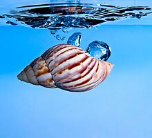Shell Drop into Water by Riaan Roux