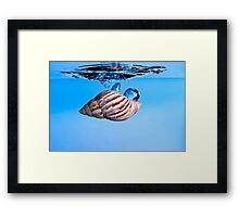 Shell Drop into Water Framed Print