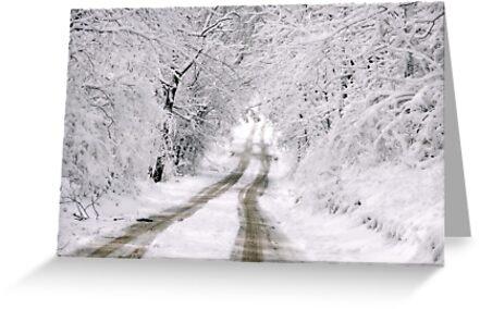 First Fallen Snow by Pietrina Elena Photography