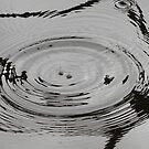 Reflecting Ripples by Cherax