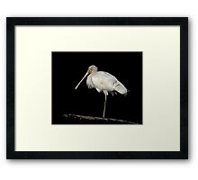 The Spoonbill Framed Print