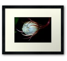 Queen of the night #3 Framed Print