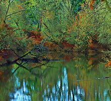 Wetlands in Autumn by PrettyPix