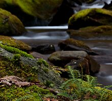 SomeWhere On Walker Creek by Forrest Tainio