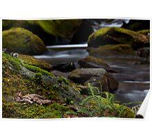 SomeWhere On Walker Creek Poster