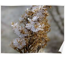Frost Crystals On  Goldenrod Poster