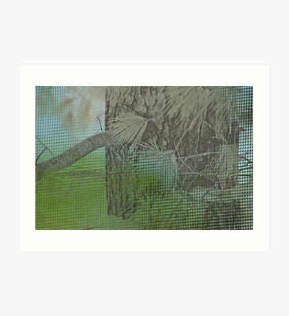 a study of the pine... Art Print