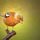 Chaffinch on Gold by M.S. Photography/Art