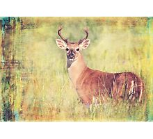 White Tailed Buck Photographic Print
