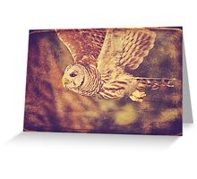 Barred Owl Textured Greeting Card