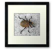 Patches Framed Print