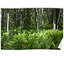Ferns Among the Trees Poster