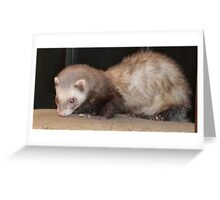 Ferret on a Chair Greeting Card
