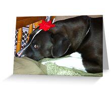 Dog With Christmas Bow Greeting Card