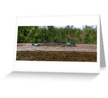 Dragonfly3 Greeting Card
