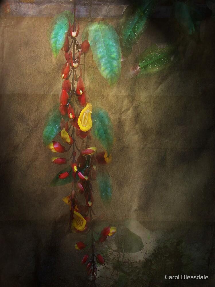 Trailing Beauty by Carol Bleasdale