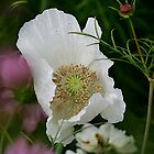 Oh So White by Rose Landry