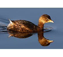 Pied-Billed Grebe Photographic Print
