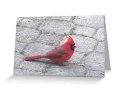 Red code on the ground Greeting Card