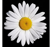 Perfectly Daisy Photographic Print