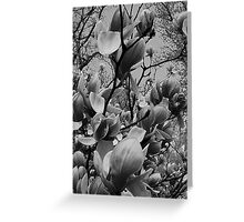 Spring in black and white..in a brave new world Greeting Card
