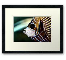 Emperor Angel Framed Print