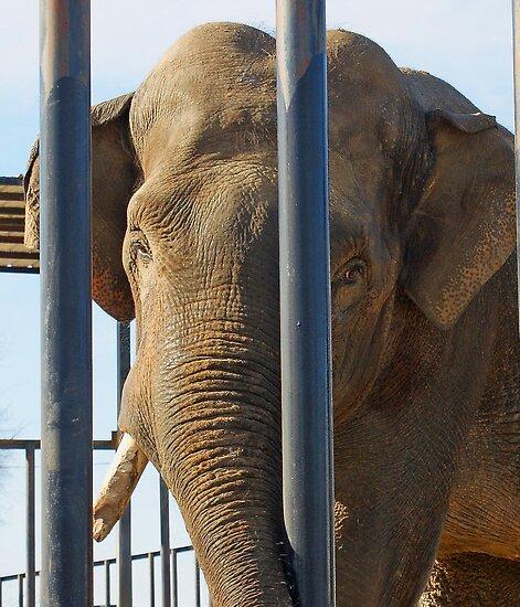 big boy elephant by pcfyi
