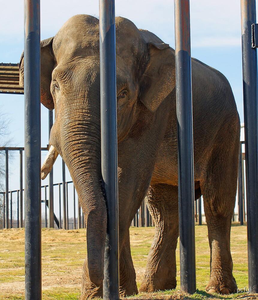 big boy elephant in full by pcfyi