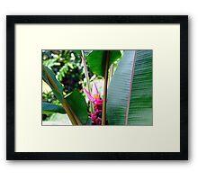 Rainforest foilage II Framed Print
