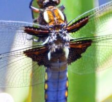 Broad Bodied Chaser Dragonfly Sticker