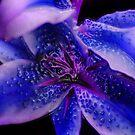 Blu Virus by Damien  Dust