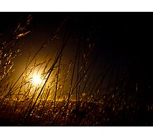 The Tall Grass Photographic Print