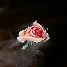 rose  by MartieLowings