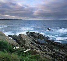 """""""Bermaglilies"""" ∞ Bermagui, NSW - Australia by Jason Asher"""