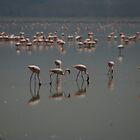 Pink Flamingos by Linda Fury