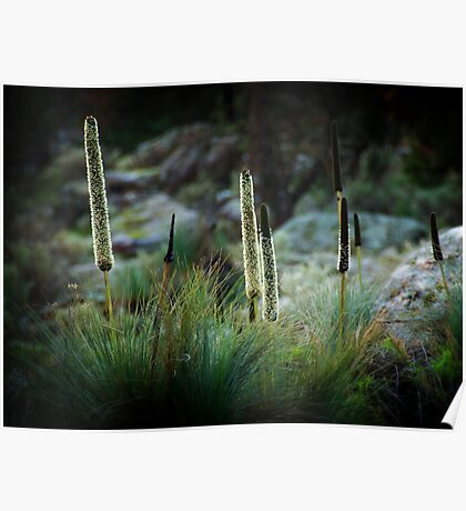 Grass Trees Poster