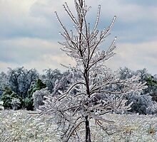 Ice Is Nice by Carolyn  Fletcher