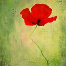 """Poppy (from """"Painted flowers"""" collection) by EvaMarIza"""