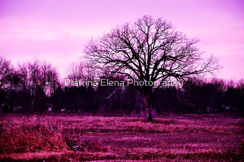 Awakened by Pietrina Elena Photography